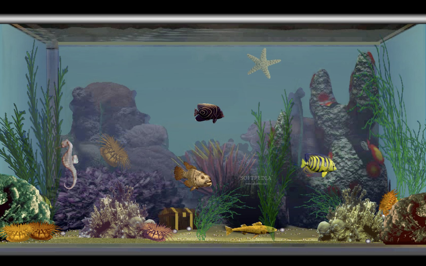 Fish tank 3d 3d fish tank screensaver 2017 fish tank for Fish tank screen