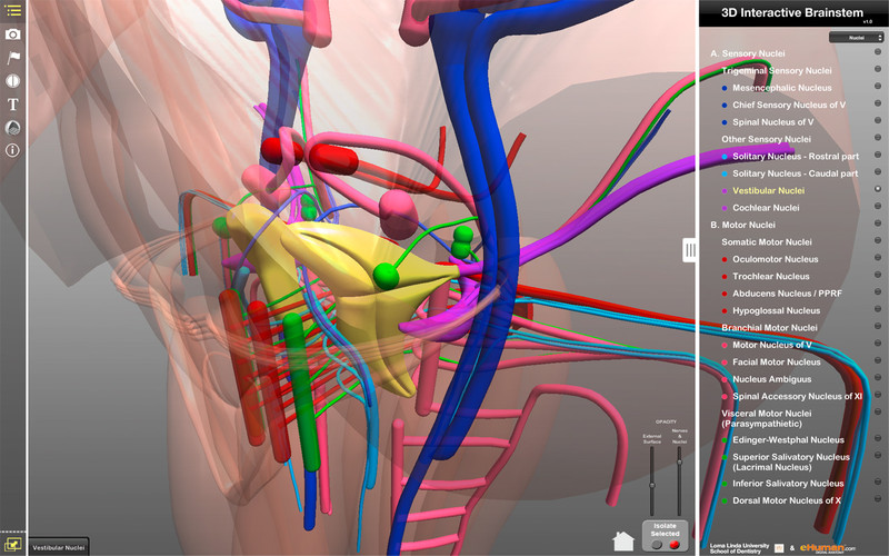 3d brain anatomy interactive